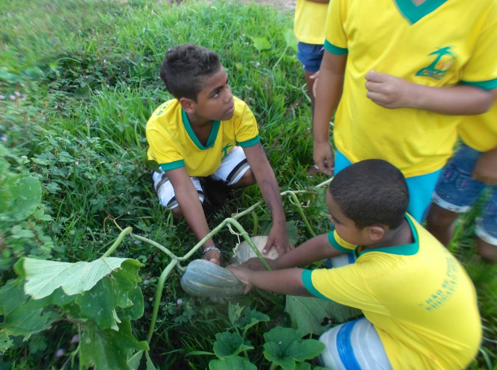 Wir bauen unser eigenes Obst und Gemüse an