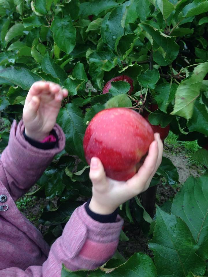 Mit frischem Obst versorgen wir Kinder in den Unterkünften